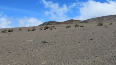 Kilimanjaro Rongai 2013-305